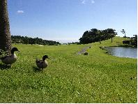 <じゃらんゴルフ> パシフィックブルーゴルフ&リゾート国東画像